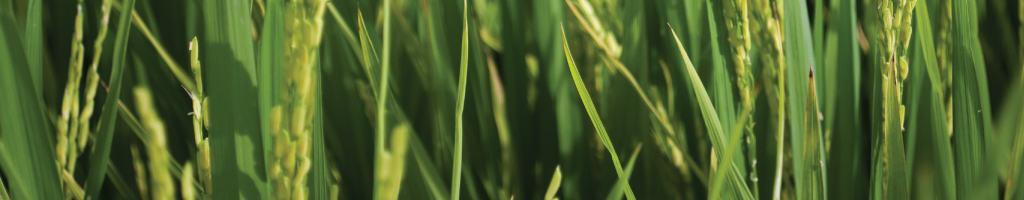 De cómo se llega uno a equivocar y otras hierbas